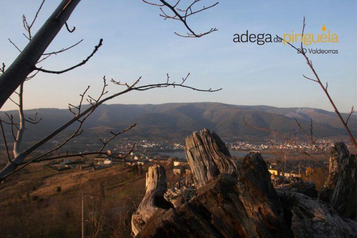 Fotos_Adega da Pinguela_02